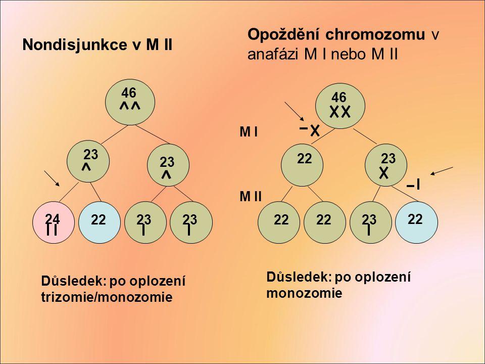 Důsledek: po oplození trizomie/monozomie Důsledek: po oplození monozomie 46 23 24 2223 46 2223 22 23 22 M I M II Opoždění chromozomu v anafázi M I neb