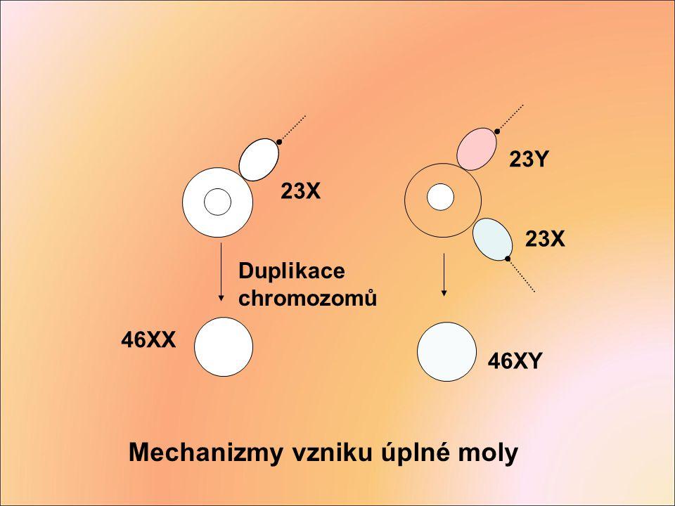 Mechanizmy vzniku úplné moly Duplikace chromozomů 46XX 23X 46XY 23X 23Y