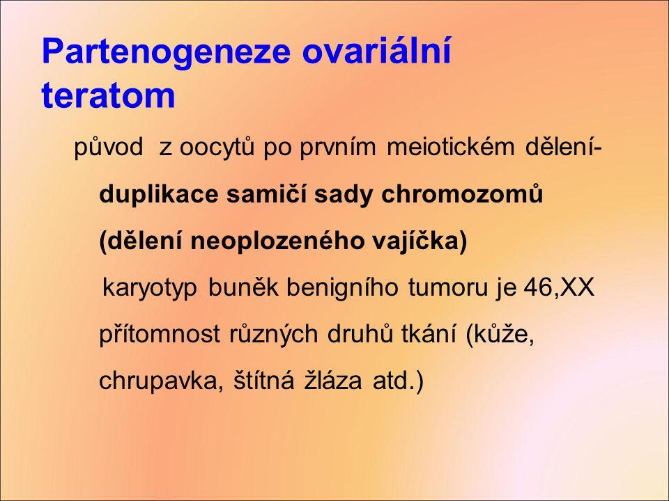 Partenogeneze o variální teratom původ z oocytů po prvním meiotickém dělení- duplikace samičí sady chromozomů (dělení neoplozeného vajíčka) karyotyp b