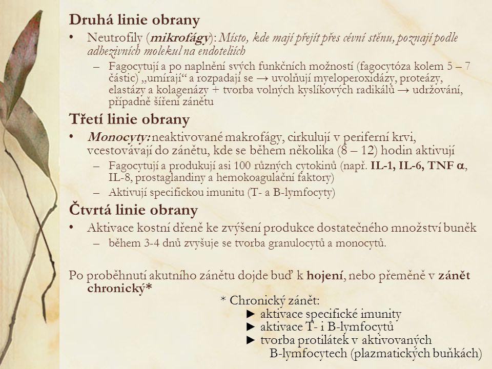 """Druhá linie obrany Neutrofily (mikrofágy): Místo, kde mají přejít přes cévní stěnu, poznají podle adhezivních molekul na endoteliích –Fagocytují a po naplnění svých funkčních možností (fagocytóza kolem 5 – 7 částic) """"umírají a rozpadají se → uvolňují myeloperoxidázy, proteázy, elastázy a kolagenázy + tvorba volných kyslíkových radikálů → udržování, případně šíření zánětu Třetí linie obrany Monocyty: neaktivované makrofágy, cirkulují v periferní krvi, vcestovávají do zánětu, kde se během několika (8 – 12) hodin aktivují –Fagocytují a produkují asi 100 různých cytokinů (např."""