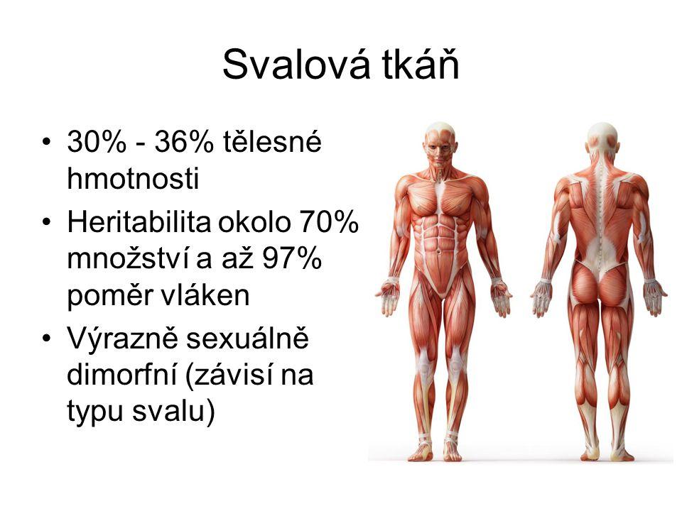 Svalová tkáň 30% - 36% tělesné hmotnosti Heritabilita okolo 70% množství a až 97% poměr vláken Výrazně sexuálně dimorfní (závisí na typu svalu)