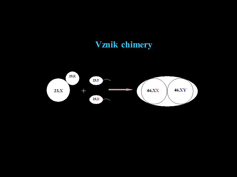 Partenogeneze u člověka ovariální teratom = duplikace chromozomů a dělení neoplozeného vajíčka