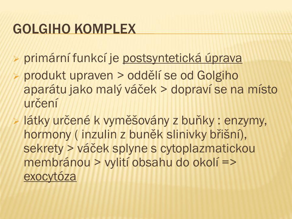 GOLGIHO KOMPLEX  primární funkcí je postsyntetická úprava  produkt upraven > oddělí se od Golgiho aparátu jako malý váček > dopraví se na místo urče
