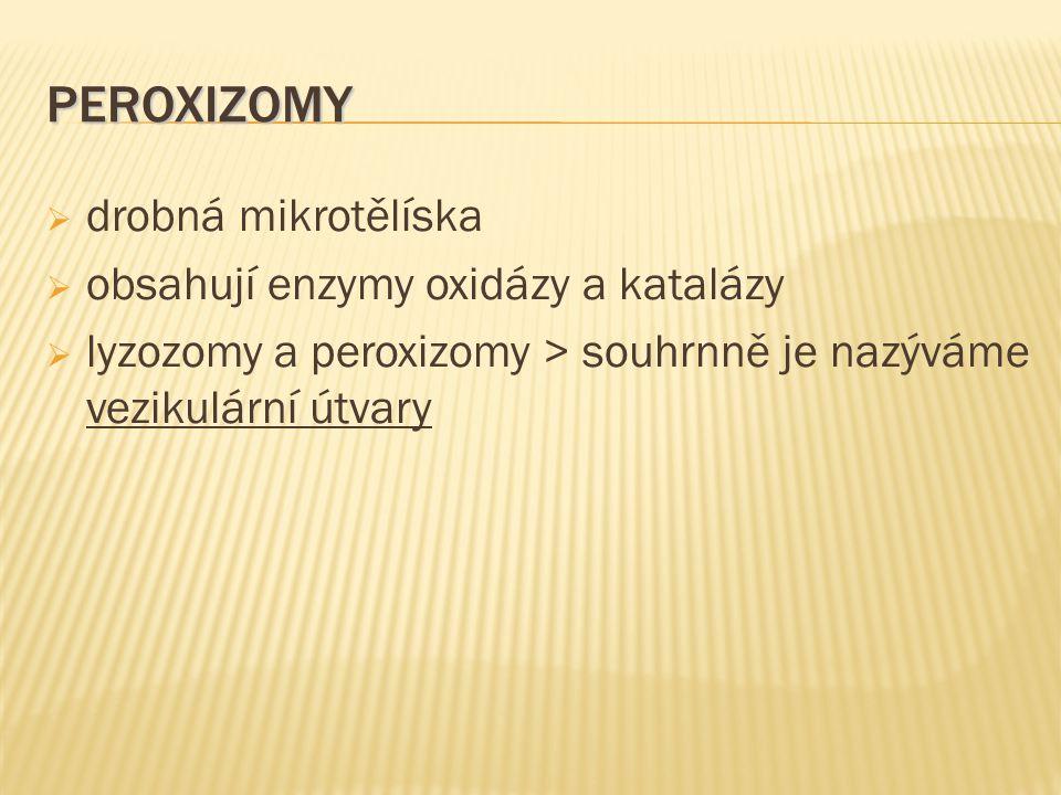 PEROXIZOMY  drobná mikrotělíska  obsahují enzymy oxidázy a katalázy  lyzozomy a peroxizomy > souhrnně je nazýváme vezikulární útvary