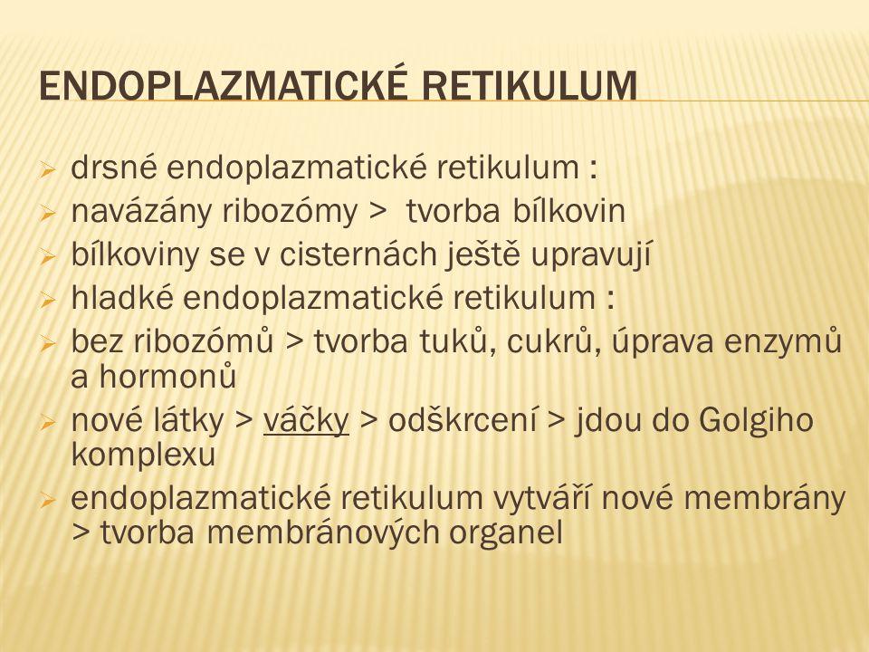  drsné endoplazmatické retikulum :  navázány ribozómy > tvorba bílkovin  bílkoviny se v cisternách ještě upravují  hladké endoplazmatické retikulu
