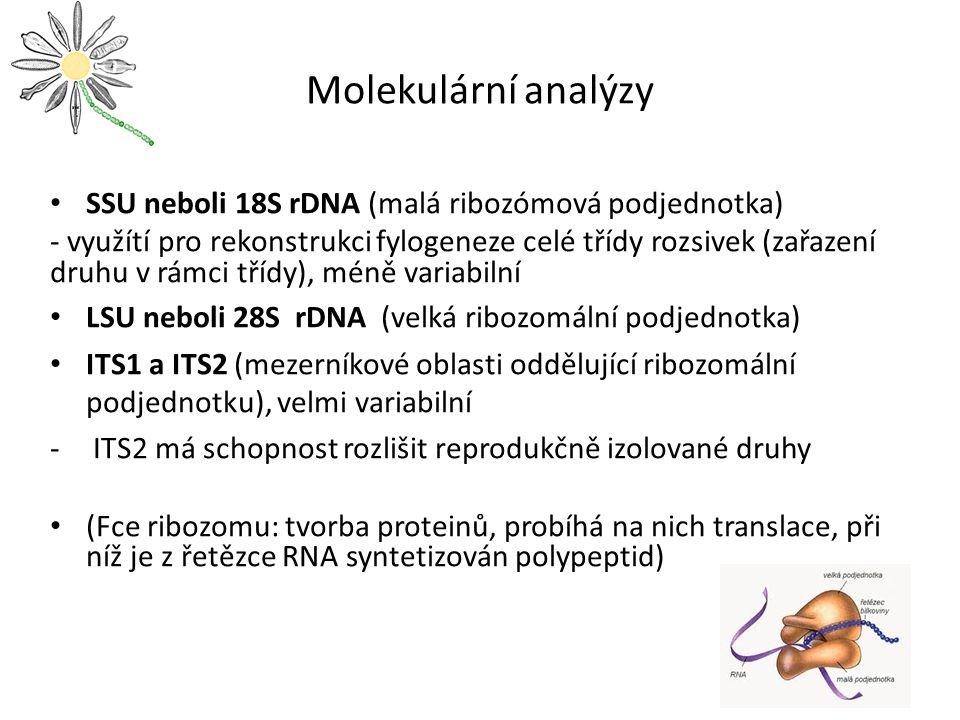Molekulární analýzy SSU neboli 18S rDNA (malá ribozómová podjednotka) - využítí pro rekonstrukci fylogeneze celé třídy rozsivek (zařazení druhu v rámci třídy), méně variabilní LSU neboli 28S rDNA (velká ribozomální podjednotka) ITS1 a ITS2 (mezerníkové oblasti oddělující ribozomální podjednotku), velmi variabilní - ITS2 má schopnost rozlišit reprodukčně izolované druhy (Fce ribozomu: tvorba proteinů, probíhá na nich translace, při níž je z řetězce RNA syntetizován polypeptid)