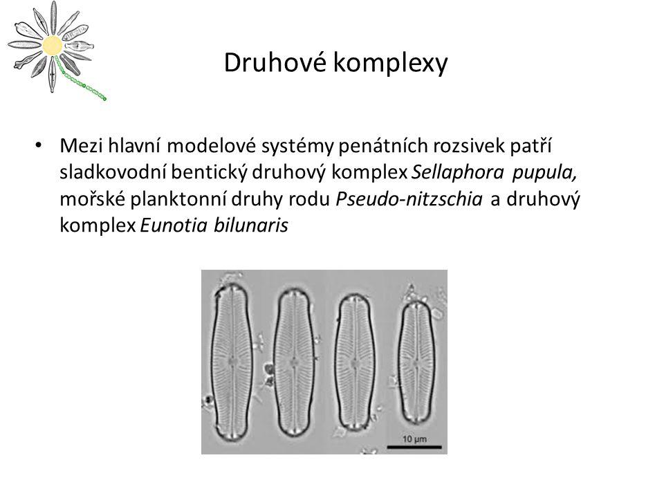 Druhové komplexy Mezi hlavní modelové systémy penátních rozsivek patří sladkovodní bentický druhový komplex Sellaphora pupula, mořské planktonní druhy rodu Pseudo-nitzschia a druhový komplex Eunotia bilunaris