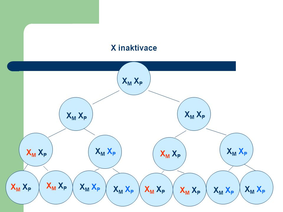 X M X P XM XPXM XP XM XPXM XP XM XPXM XP XM XPXM XP XM XPXM XP XM XPXM XP X inaktivace