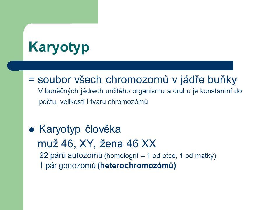 Karyotyp = soubor všech chromozomů v jádře buňky V buněčných jádrech určitého organismu a druhu je konstantní do počtu, velikosti i tvaru chromozómů Karyotyp člověka muž 46, XY, žena 46 XX 22 párů autozomů (homologní – 1 od otce, 1 od matky) 1 pár gonozomů (heterochromozómů)