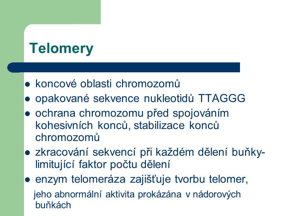 Detekce telomerických sekvencí metodou FISH (telomerické sondy) Vpravo nahoře - myší chromozomy (telocentrické) Applied imaging katalog 1997