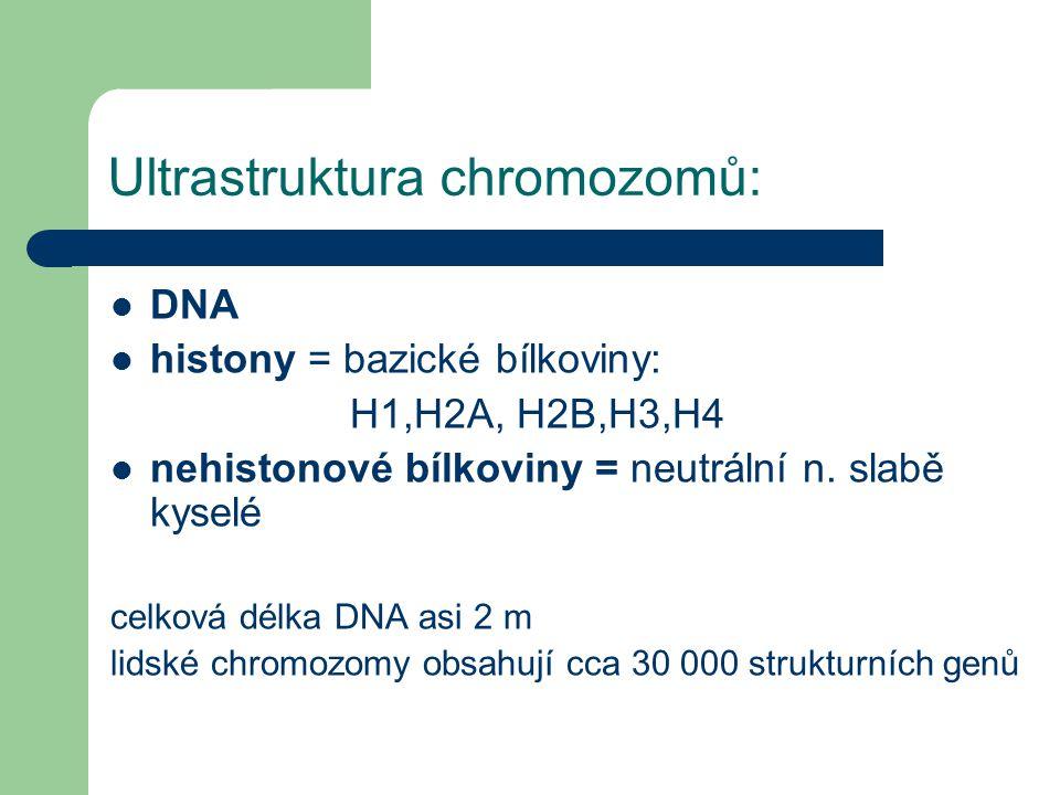 Ultrastruktura chromozomů: Složení chromatinu: DNA histony = bazické bílkoviny: H1,H2A, H2B,H3,H4 nehistonové bílkoviny = neutrální n.