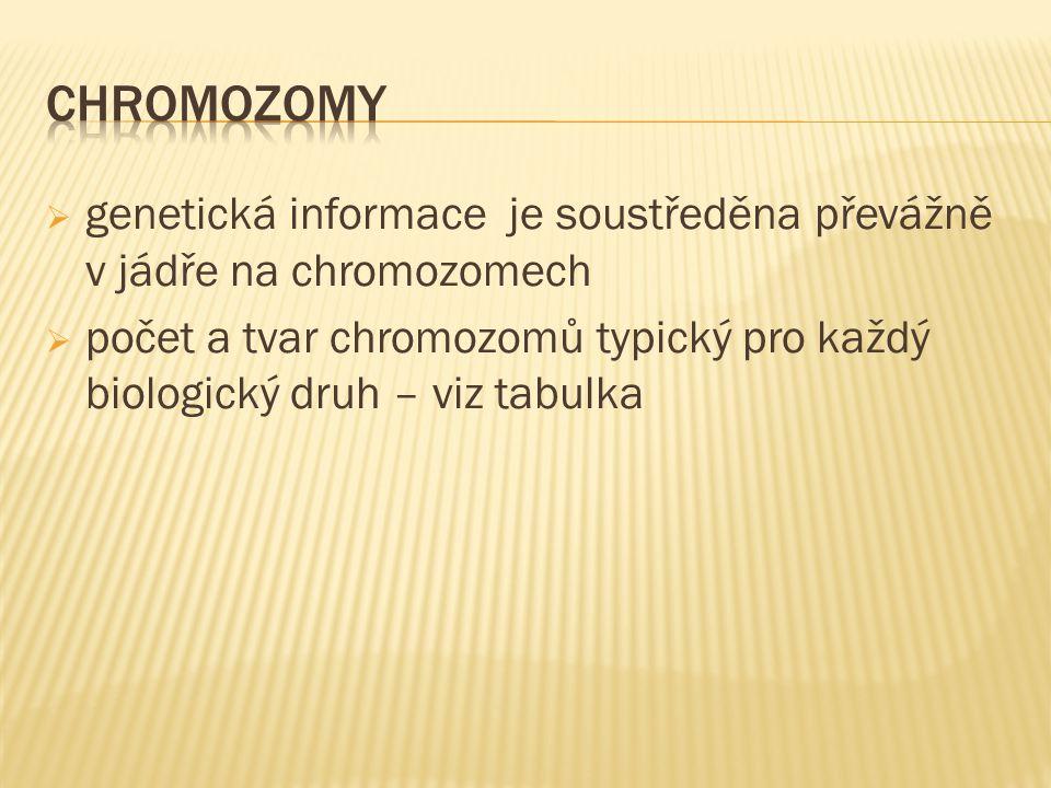  genetická informace je soustředěna převážně v jádře na chromozomech  počet a tvar chromozomů typický pro každý biologický druh – viz tabulka