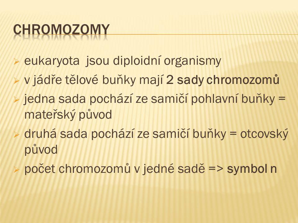  eukaryota jsou diploidní organismy  v jádře tělové buňky mají 2 sady chromozomů  jedna sada pochází ze samičí pohlavní buňky = mateřský původ  dr