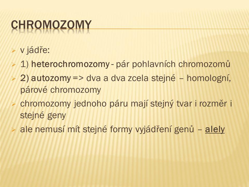  v jádře:  1) heterochromozomy - pár pohlavních chromozomů  2) autozomy => dva a dva zcela stejné – homologní, párové chromozomy  chromozomy jedno