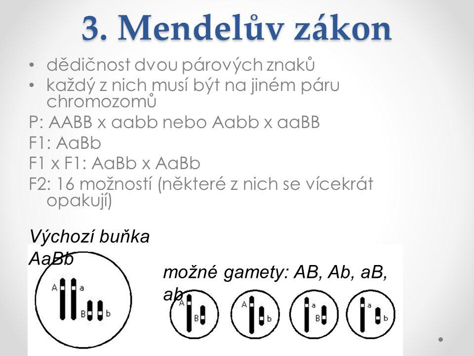 3. Mendelův zákon dědičnost dvou párových znaků každý z nich musí být na jiném páru chromozomů P: AABB x aabb nebo Aabb x aaBB F1: AaBb F1 x F1: AaBb