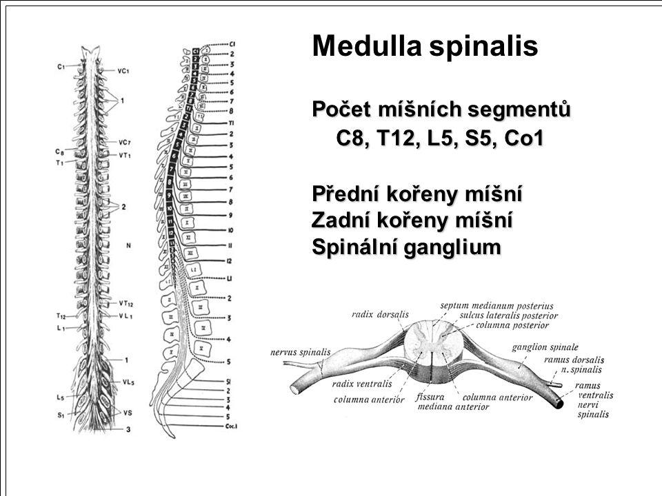 Počet míšních segmentů C8, T12, L5, S5, Co1 C8, T12, L5, S5, Co1 Přední kořeny míšní Zadní kořeny míšní Spinální ganglium Medulla spinalis