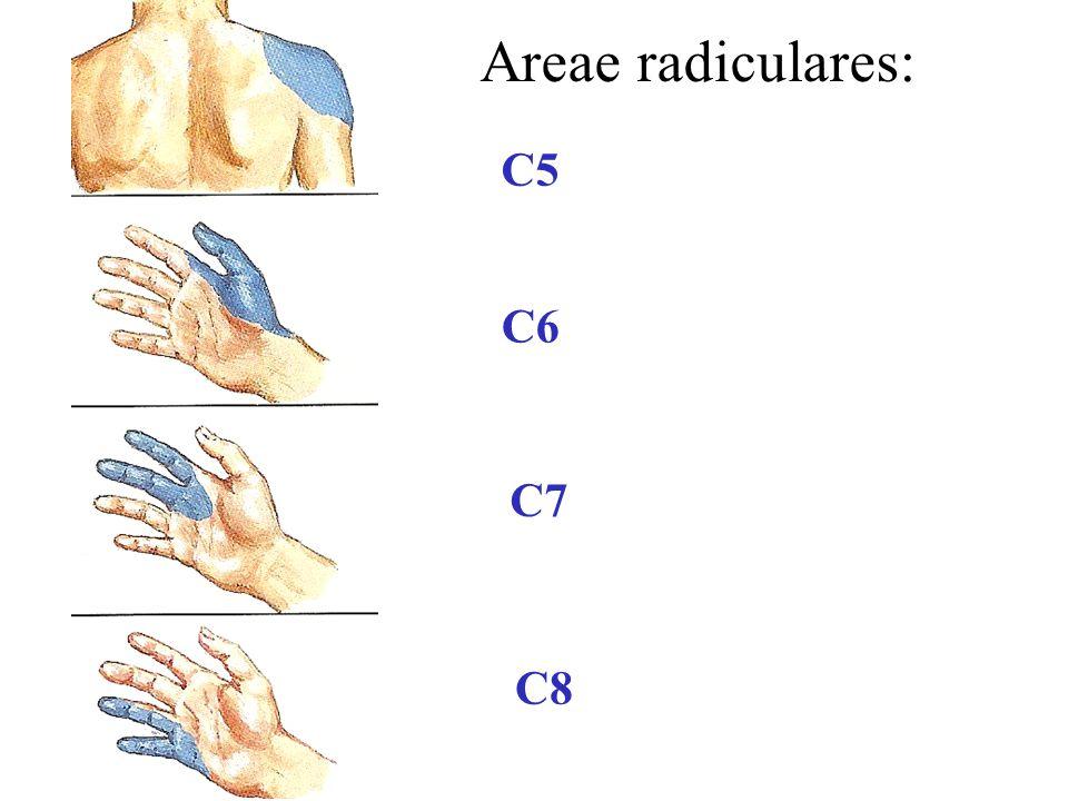 C5 C6 C7 C8