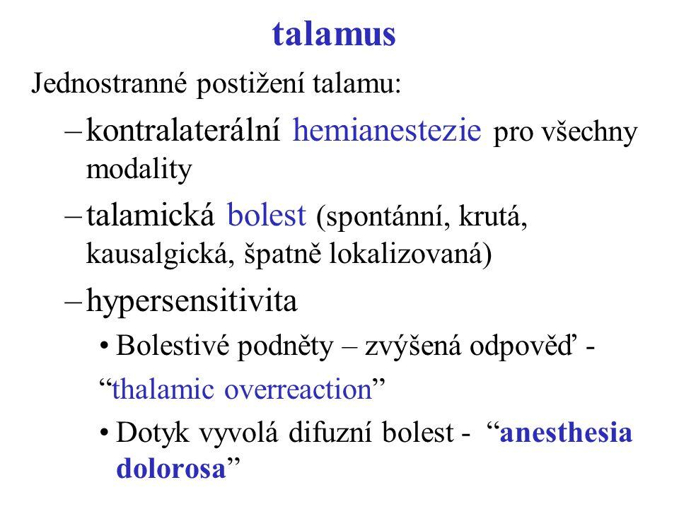 talamus Jednostranné postižení talamu: –kontralaterální hemianestezie pro všechny modality –talamická bolest (spontánní, krutá, kausalgická, špatně lo