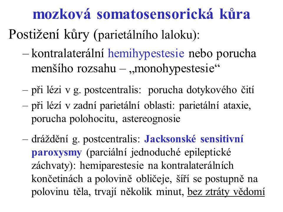 """mozková somatosensorická kůra Postižení kůry ( parietálního laloku): –kontralaterální hemihypestesie nebo porucha menšího rozsahu – """"monohypestesie"""" –"""