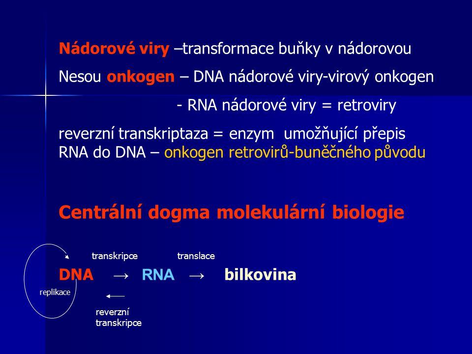 Nádorové viry –transformace buňky v nádorovou Nesou onkogen – DNA nádorové viry-virový onkogen - RNA nádorové viry = retroviry reverzní transkriptaza = enzym umožňující přepis RNA do DNA – onkogen retrovirů-buněčného původu Centrální dogma molekulární biologie DNA → RNA → bilkovina replikace transkripcetranslace reverzní transkripce