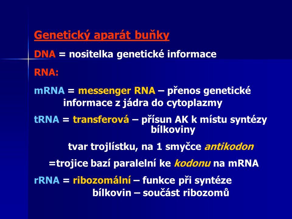 Genetický aparát buňky DNA = nositelka genetické informace RNA: mRNA = messenger RNA – přenos genetické informace z jádra do cytoplazmy tRNA = transferová – přísun AK k místu syntézy bílkoviny tvar trojlístku, na 1 smyčce antikodon =trojice bazí paralelní ke kodonu na mRNA rRNA = ribozomální – funkce při syntéze bílkovin – součást ribozomů