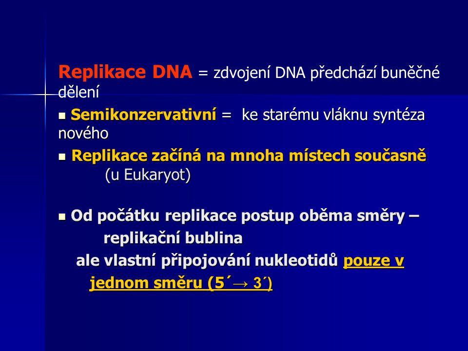 Replikace DNA = zdvojení DNA předchází buněčné dělení Semikonzervativní = ke starému vláknu syntéza nového Semikonzervativní = ke starému vláknu syntéza nového Replikace začíná na mnoha místech současně (u Eukaryot) Replikace začíná na mnoha místech současně (u Eukaryot) Od počátku replikace postup oběma směry – Od počátku replikace postup oběma směry – replikační bublina replikační bublina ale vlastní připojování nukleotidů pouze v ale vlastní připojování nukleotidů pouze v jednom směru (5´ → 3´) jednom směru (5´ → 3´)