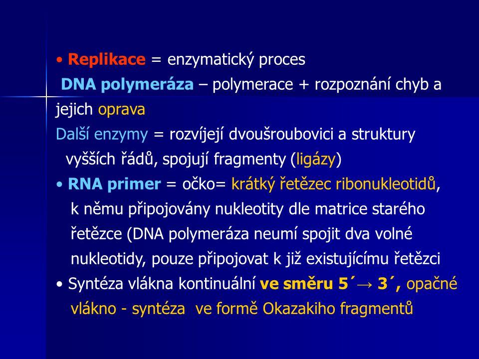 Replikace = enzymatický proces DNA polymeráza – polymerace + rozpoznání chyb a jejich oprava Další enzymy = rozvíjejí dvoušroubovici a struktury vyšších řádů, spojují fragmenty (ligázy) RNA primer = očko= krátký řetězec ribonukleotidů, k němu připojovány nukleotity dle matrice starého řetězce (DNA polymeráza neumí spojit dva volné nukleotidy, pouze připojovat k již existujícímu řetězci Syntéza vlákna kontinuální ve směru 5´ → 3´, opačné vlákno - syntéza ve formě Okazakiho fragmentů