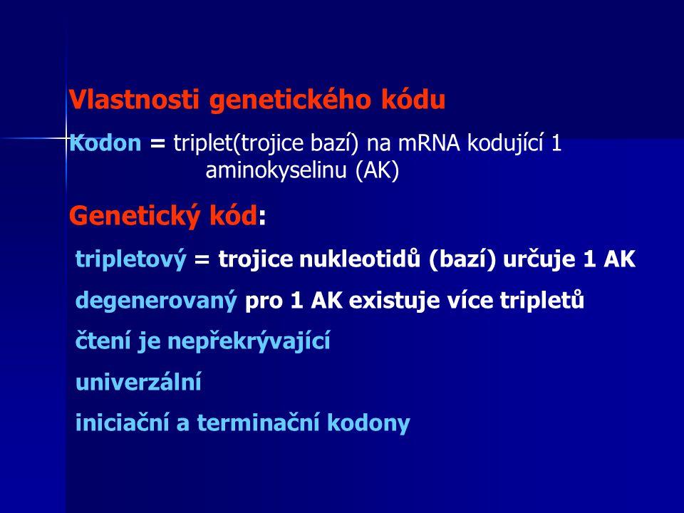 Vlastnosti genetického kódu Kodon = triplet(trojice bazí) na mRNA kodující 1 aminokyselinu (AK) Genetický kód: tripletový = trojice nukleotidů (bazí) určuje 1 AK degenerovaný pro 1 AK existuje více tripletů čtení je nepřekrývající univerzální iniciační a terminační kodony