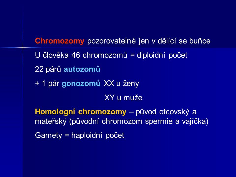 Chromozomy pozorovatelné jen v dělící se buňce U člověka 46 chromozomů = diploidní počet 22 párů autozomů + 1 pár gonozomů XX u ženy XY u muže Homologní chromozomy – původ otcovský a mateřský (původní chromozom spermie a vajíčka) Gamety = haploidní počet