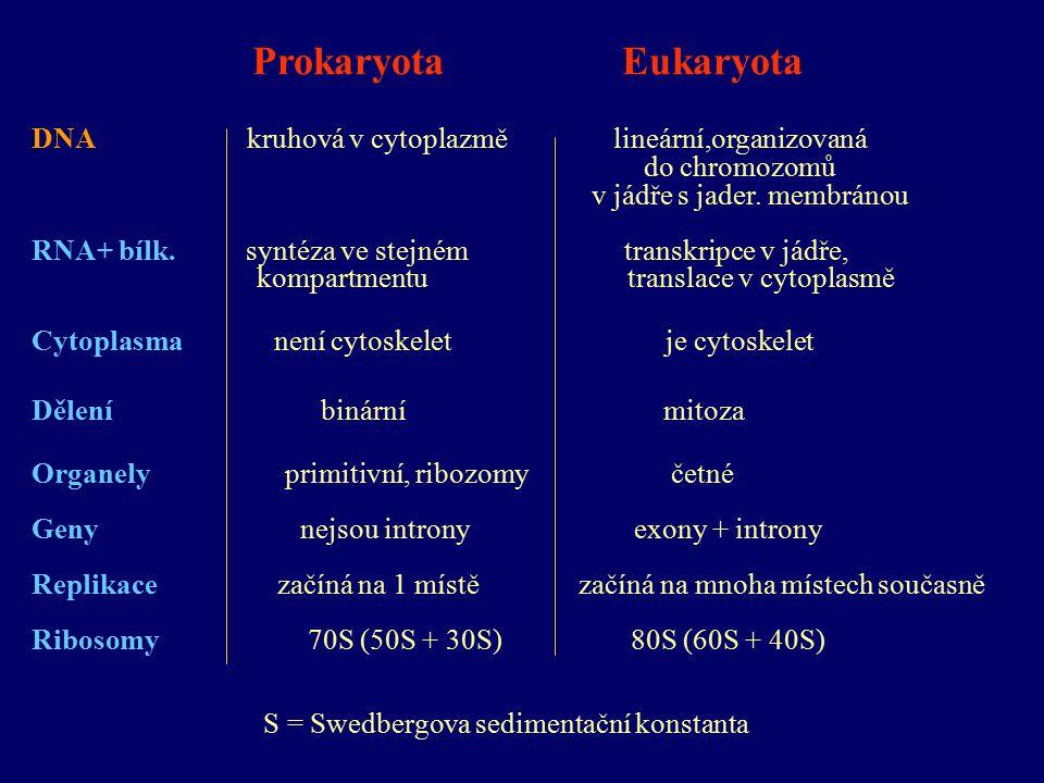 Prokaryota Eukaryota DNA kruhová v cytoplazmě lineární,organizovaná do chromozomů v jádře s jader.