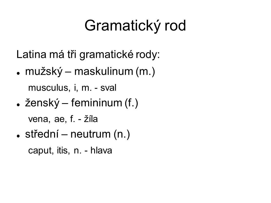 Gramatický rod Latina má tři gramatické rody: mužský – maskulinum (m.) musculus, i, m. - sval ženský – femininum (f.) vena, ae, f. - žíla střední – ne
