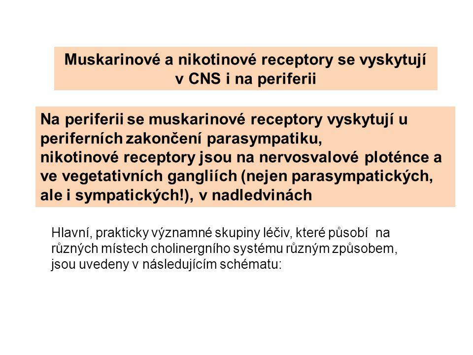 Muskarinové a nikotinové receptory se vyskytují v CNS i na periferii Na periferii se muskarinové receptory vyskytují u periferních zakončení parasympa