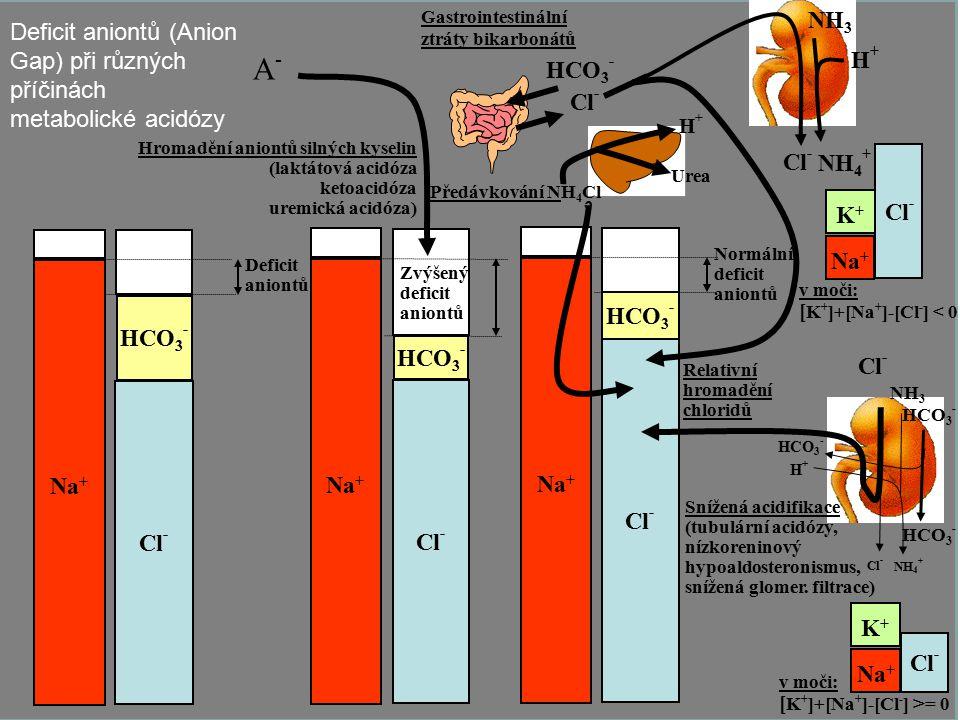 23 Na + Cl - HCO 3 - Na + Cl - HCO 3 - Na + Cl - Deficit aniontů HCO 3 - Hromadění aniontů silných kyselin (laktátová acidóza ketoacidóza uremická aci