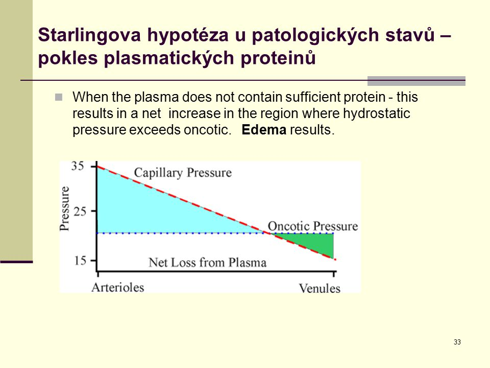 33 When the plasma does not contain sufficient protein - this results in a net increase in the region where hydrostatic pressure exceeds oncotic.