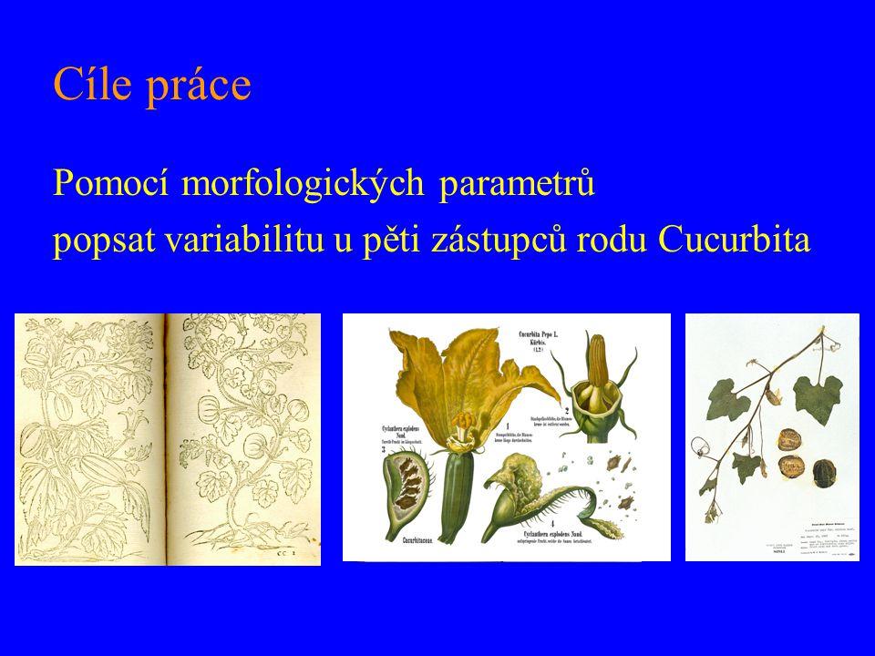 Cíle práce Pomocí morfologických parametrů popsat variabilitu u pěti zástupců rodu Cucurbita