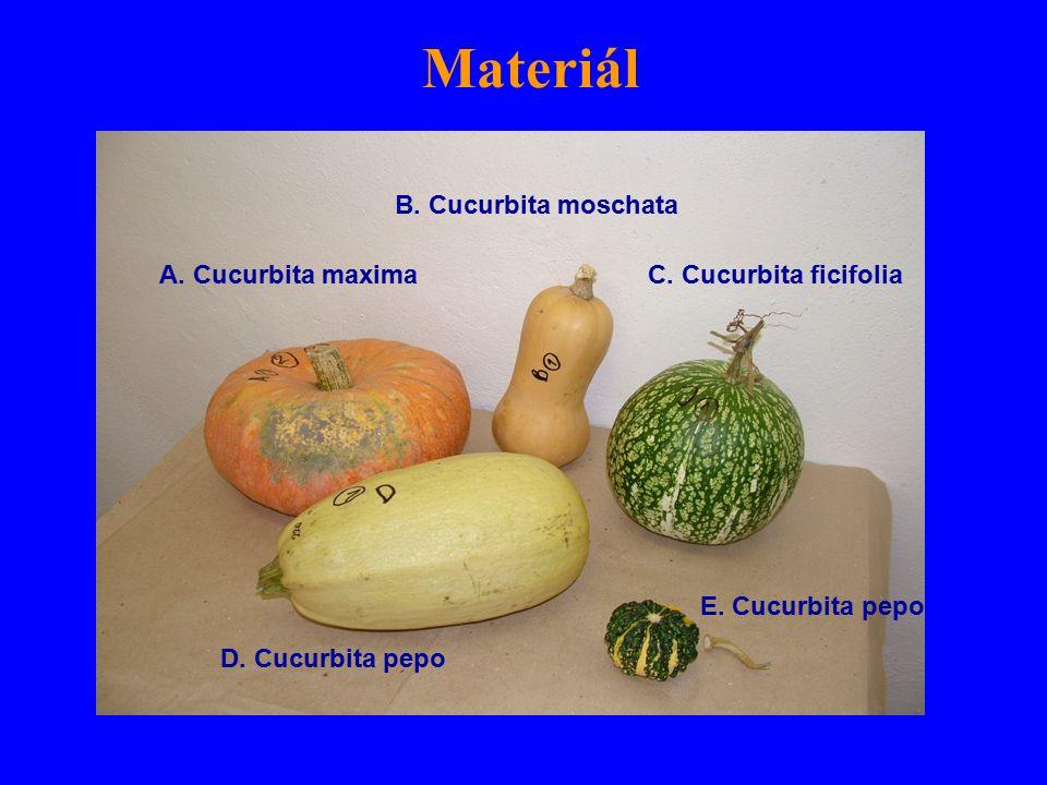 Materiál A. Cucurbita maxima B. Cucurbita moschata C.