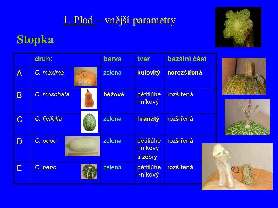 druh:barvatvarbazální část A C. maximazelenákulovitýnerozšířená B C.