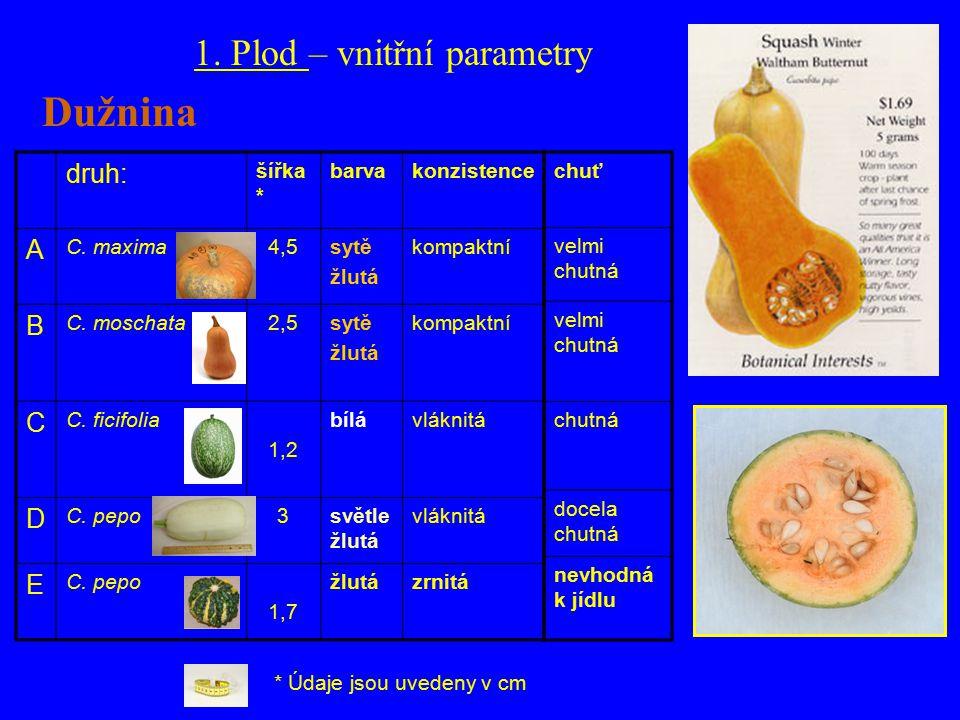 druh: šířka * barvakonzistence A C. maxima4,5sytě žlutá kompaktní B C.
