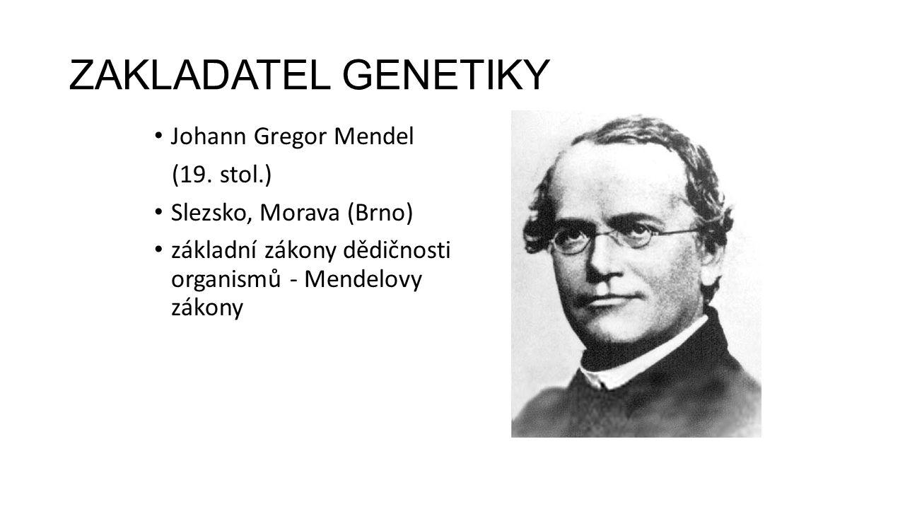 ZAKLADATEL GENETIKY Johann Gregor Mendel (19. stol.) Slezsko, Morava (Brno) základní zákony dědičnosti organismů - Mendelovy zákony