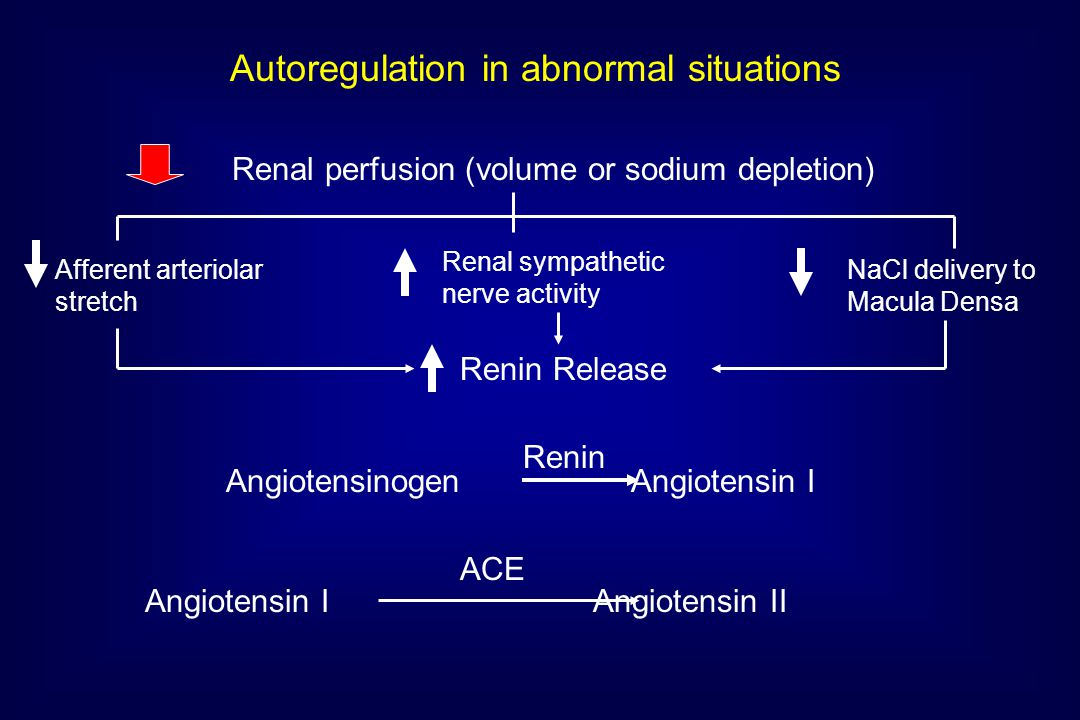 Renal perfusion (volume or sodium depletion) Afferent arteriolar stretch Renal sympathetic nerve activity NaCl delivery to Macula Densa Renin Release Angiotensinogen Angiotensin I Renin Autoregulation in abnormal situations Angiotensin I Angiotensin II ACE