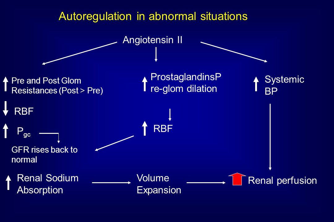 Autoregulation in abnormal situations Angiotensin II Pre and Post Glom Resistances (Post > Pre) RBF P gc GFR rises back to normal ProstaglandinsP re-glom dilation Systemic BP Renal Sodium Absorption Volume Expansion RBF Renal perfusion