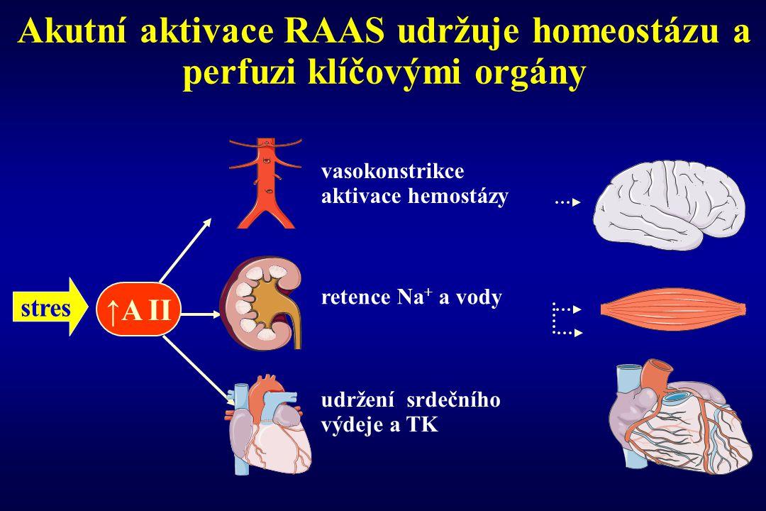 Akutní aktivace RAAS udržuje homeostázu a perfuzi klíčovými orgány retence Na + a vody vasokonstrikce aktivace hemostázy ↑A II udržení srdečního výdej