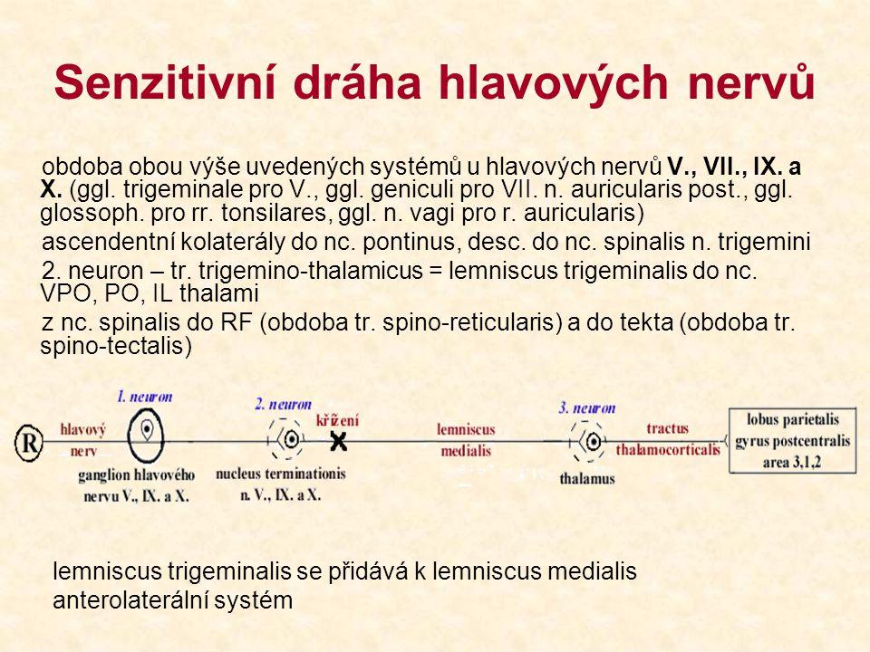 Senzitivní dráha hlavových nervů obdoba obou výše uvedených systémů u hlavových nervů V., VII., IX. a X. (ggl. trigeminale pro V., ggl. geniculi pro V