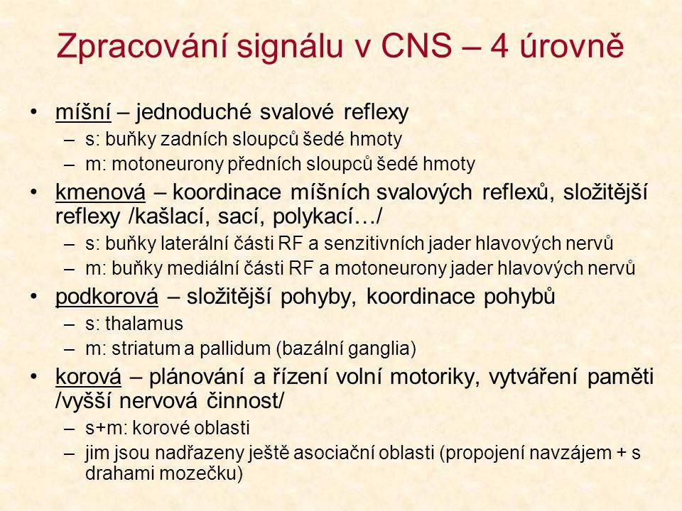 Základní dělení drah Asociační (místa v téže polokouli) Komisurální (odpovídající místa obou polokoulí) Projekční (různé úrovně CNS)