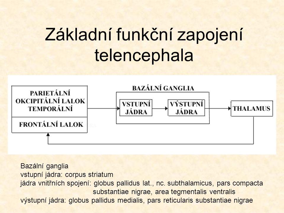 Základní funkční zapojení telencephala Bazální ganglia vstupní jádra: corpus striatum jádra vnitřních spojení: globus pallidus lat., nc. subthalamicus