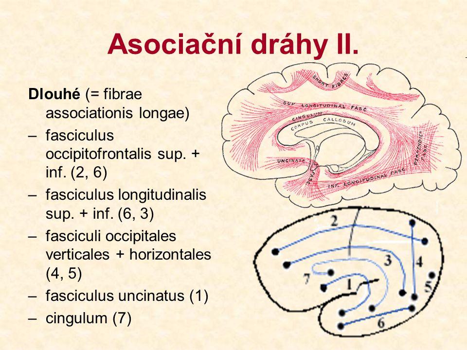 Komisurální dráhy I.