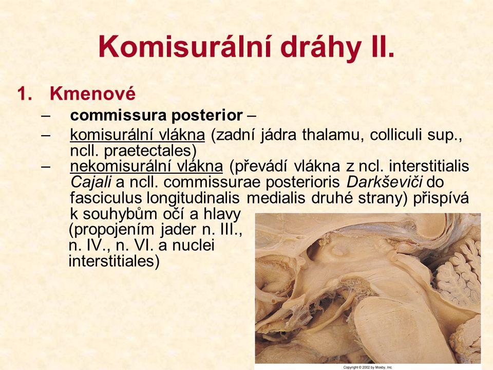 Komisurální dráhy II. 1.Kmenové –commissura posterior – –komisurální vlákna (zadní jádra thalamu, colliculi sup., ncll. praetectales) –nekomisurální v
