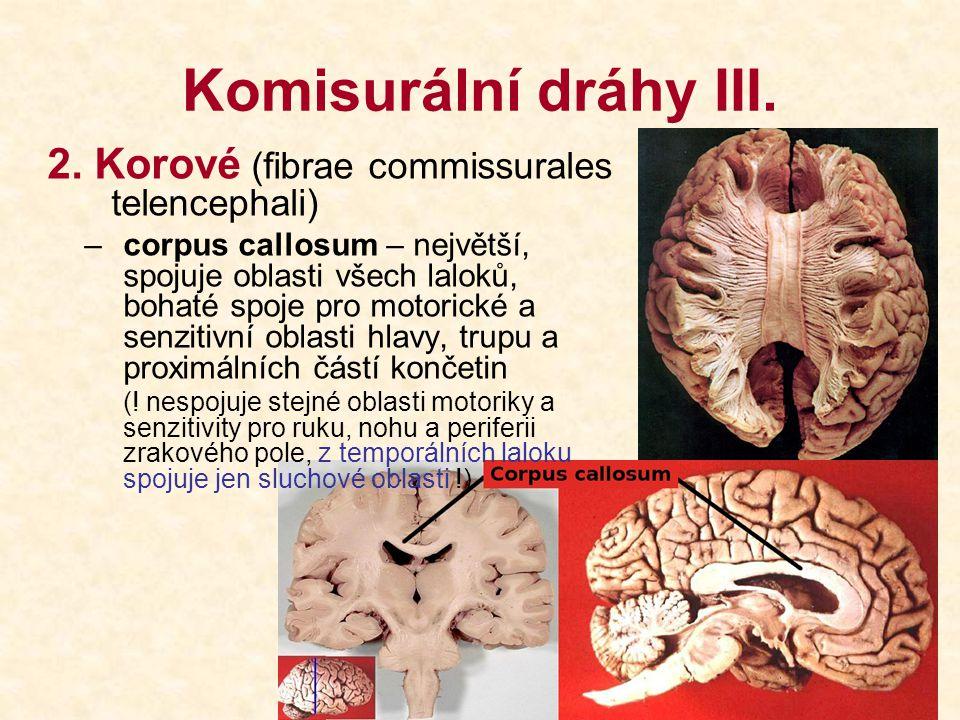 Komisurální dráhy III. 2. Korové (fibrae commissurales telencephali) –corpus callosum – největší, spojuje oblasti všech laloků, bohaté spoje pro motor