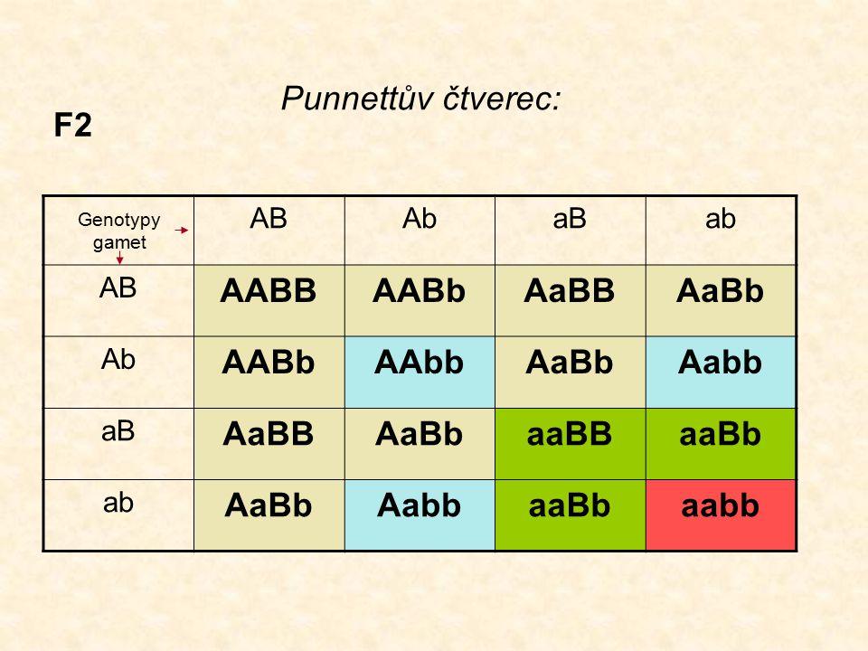 F2 ABAbaBab AB AABBAABbAaBBAaBb Ab AABbAAbbAaBbAabb aB AaBBAaBbaaBBaaBb ab AaBbAabbaaBbaabb Genotypy gamet Punnettův čtverec: