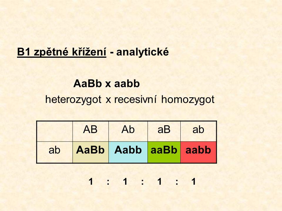 B1 zpětné křížení - analytické AaBb x aabb heterozygot x recesivní homozygot ABAbaBab AaBbAabbaaBbaabb 1 : 1 : 1 : 1